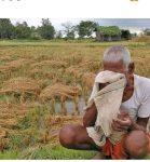 किसानको प्रश्न, धानको पनि बीमा हुन्छ ?